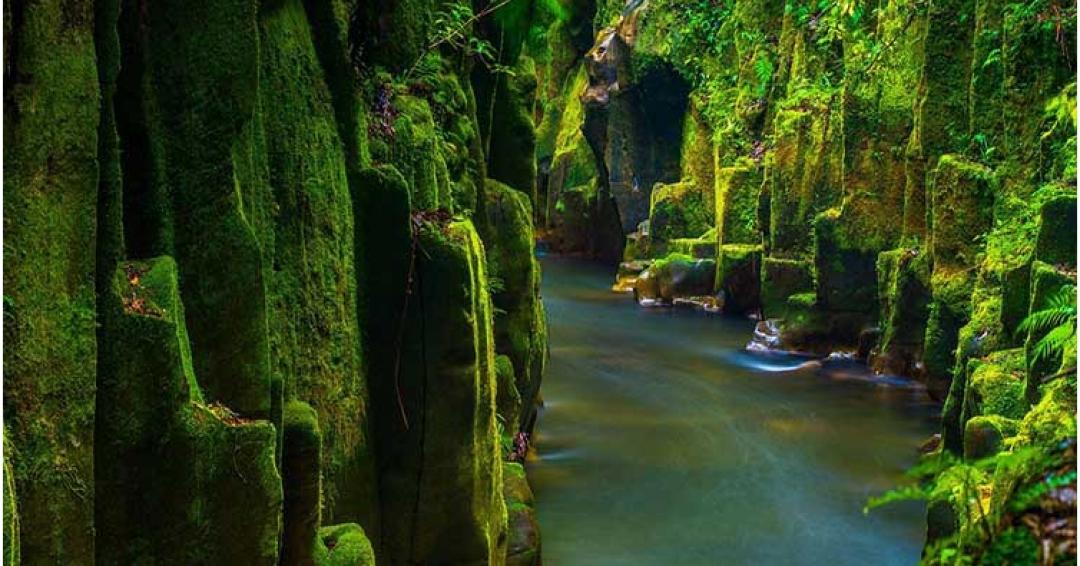 جاذبه های گردشگری روتوروا / نیوزیلند